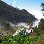 Madeira – takřka magický portugalský ostrov