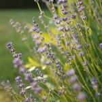 Provence – rajská zahrada Francie