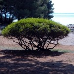 Vir – chorvatský ostrov čekající na objevení